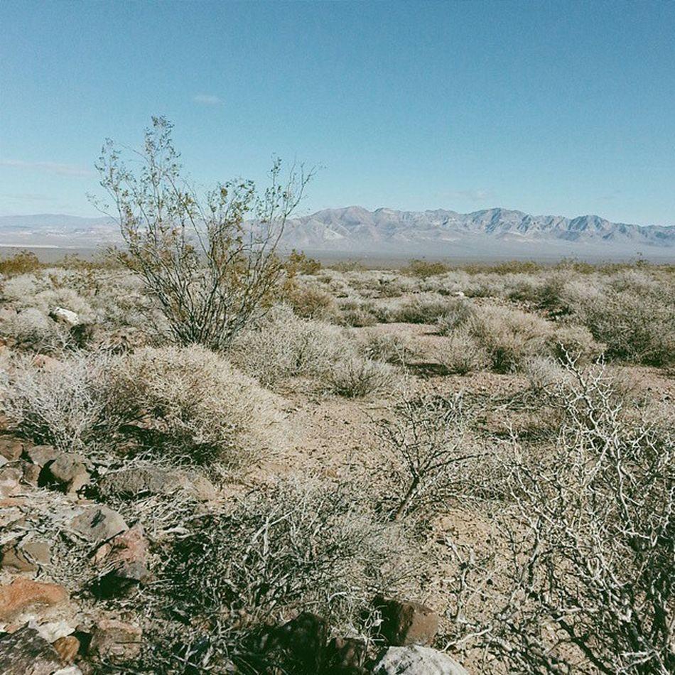 Winter deserts have a surprising amount of green. Deathvalleynationalpark Deathvalley Daylightpassroad Amargosadesert california nevada roadtrip
