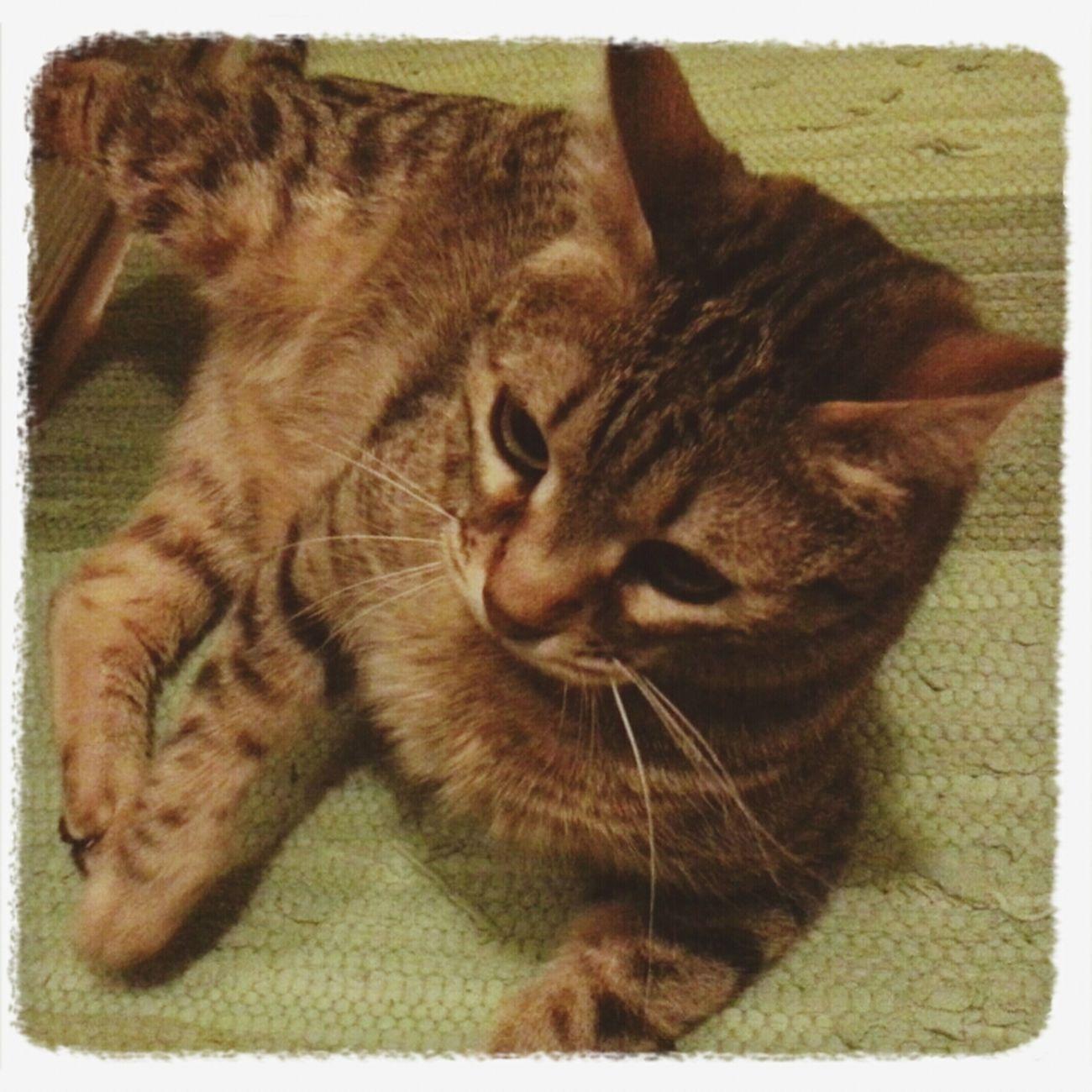 My Cat Giochi notturni.