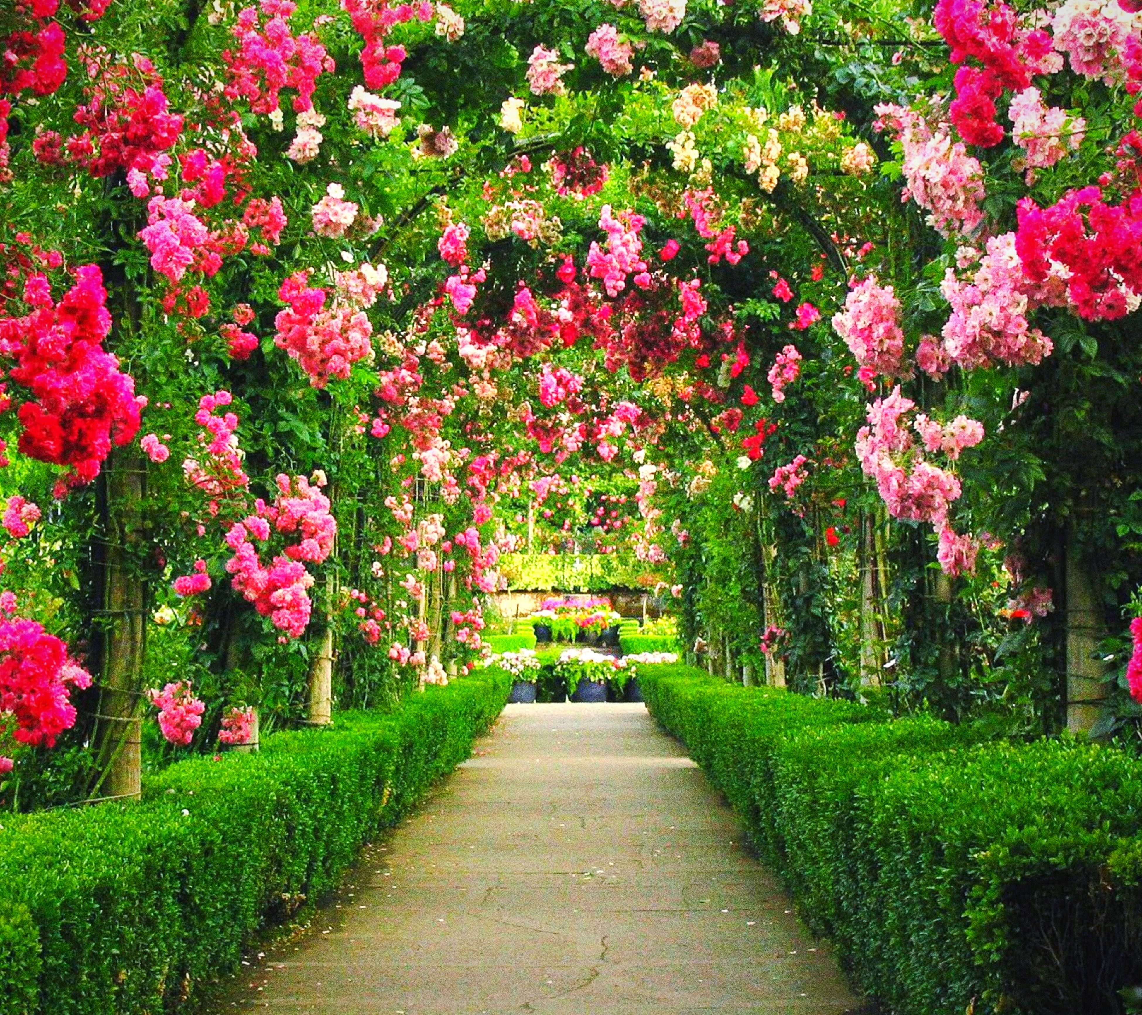 flower, the way forward, tree, growth, beauty in nature, nature, freshness, park - man made space, footpath, green color, tranquility, grass, plant, diminishing perspective, walkway, tranquil scene, pathway, lush foliage, day, blossom