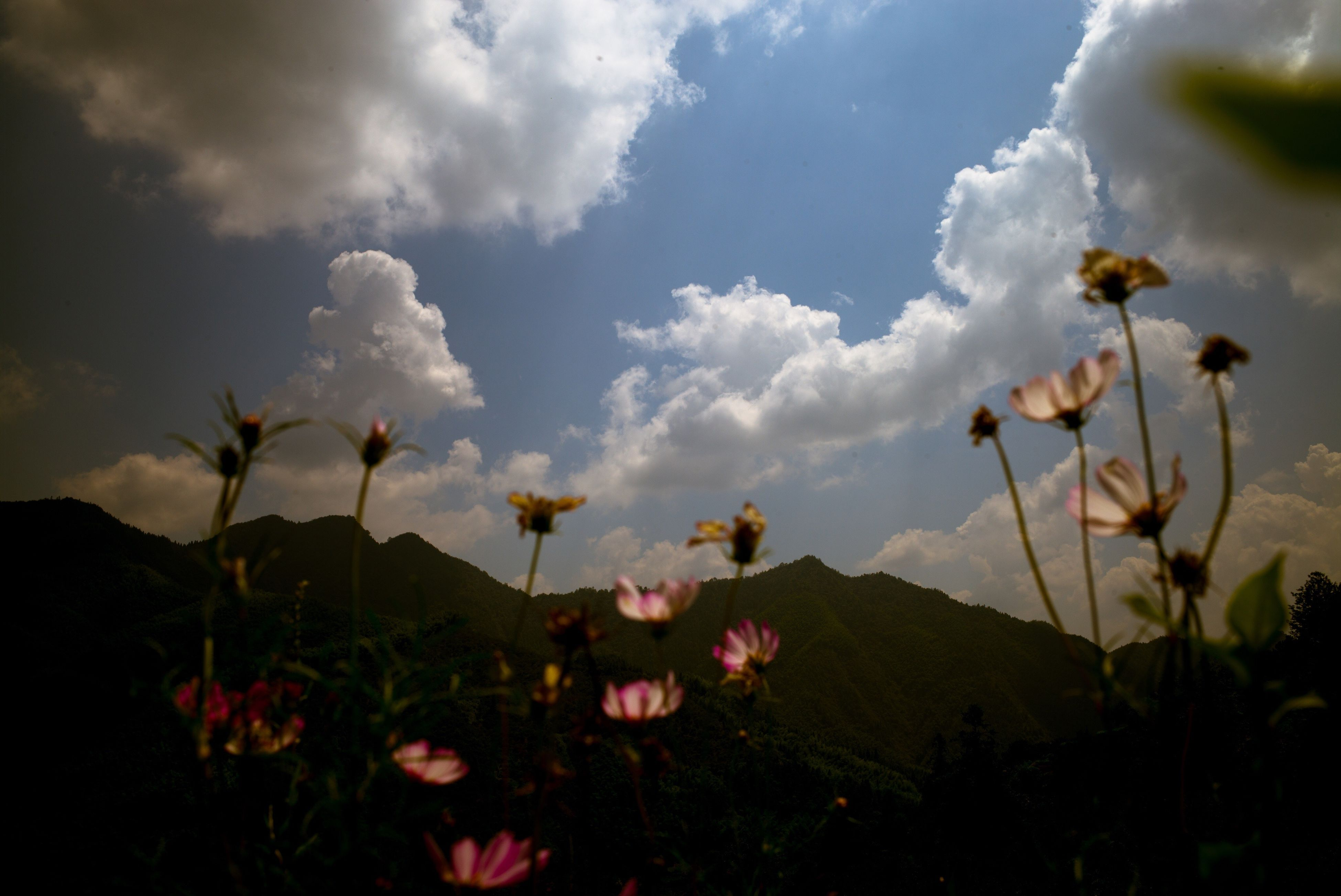 flower, freshness, fragility, growth, beauty in nature, sky, petal, plant, nature, cloud, in bloom, mountain, blossom, field, springtime, pink color, flower head, cloud - sky, day, outdoors, blooming, mountain range, scenics, no people, flowering plant, botany, growing