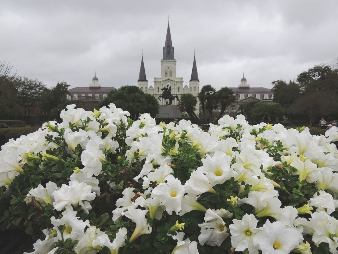 This was taken in Jackson Square New Orleans, Louisiana New Orleans Jackson Square First Eyeem Photo