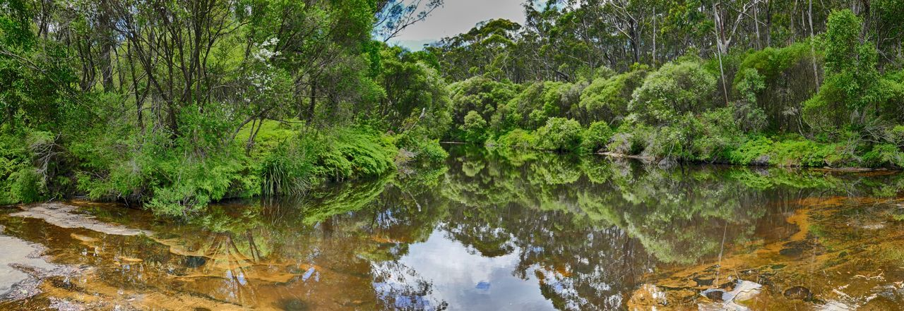 Upstream from Carrington Falls, New South Wales, Australia Australia Australian Bush Australian Landscape Beauty In Nature Forest Green Green Color Greenery Landscape Nature Outdoors Panaroma Reflection River Serenity Tranquility Water