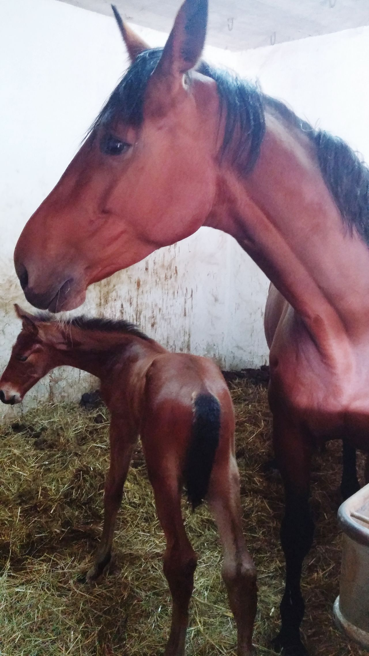 Horse Little Horse Baby Horse Mother And Son Beautiful Love Newborn Baby Konj