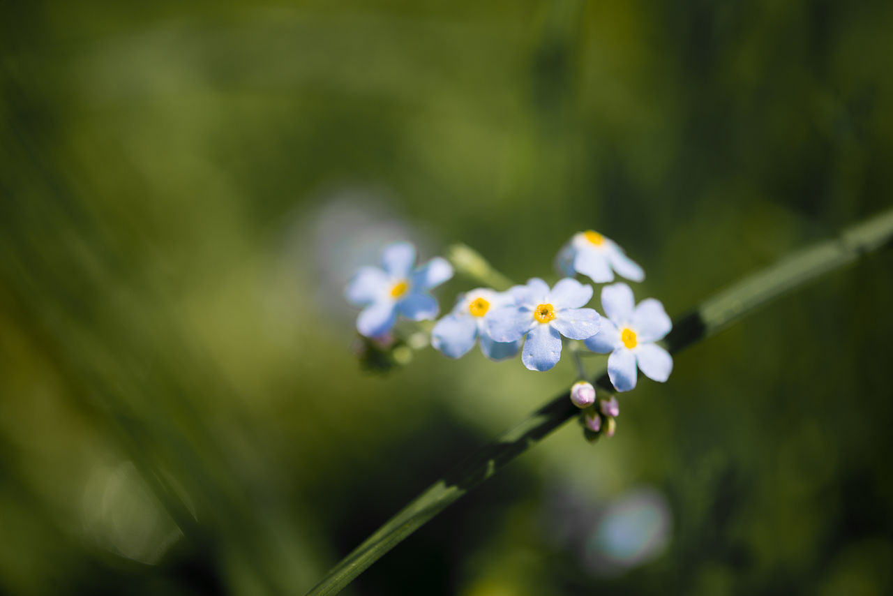 fantastically beautiful summer meadow background field with a floral pattern Beauty In Nature Blooming Blue Flowers Close-up Day Flower Flower Head Fragility Freshness Growth Nature No People Outdoors Plant
