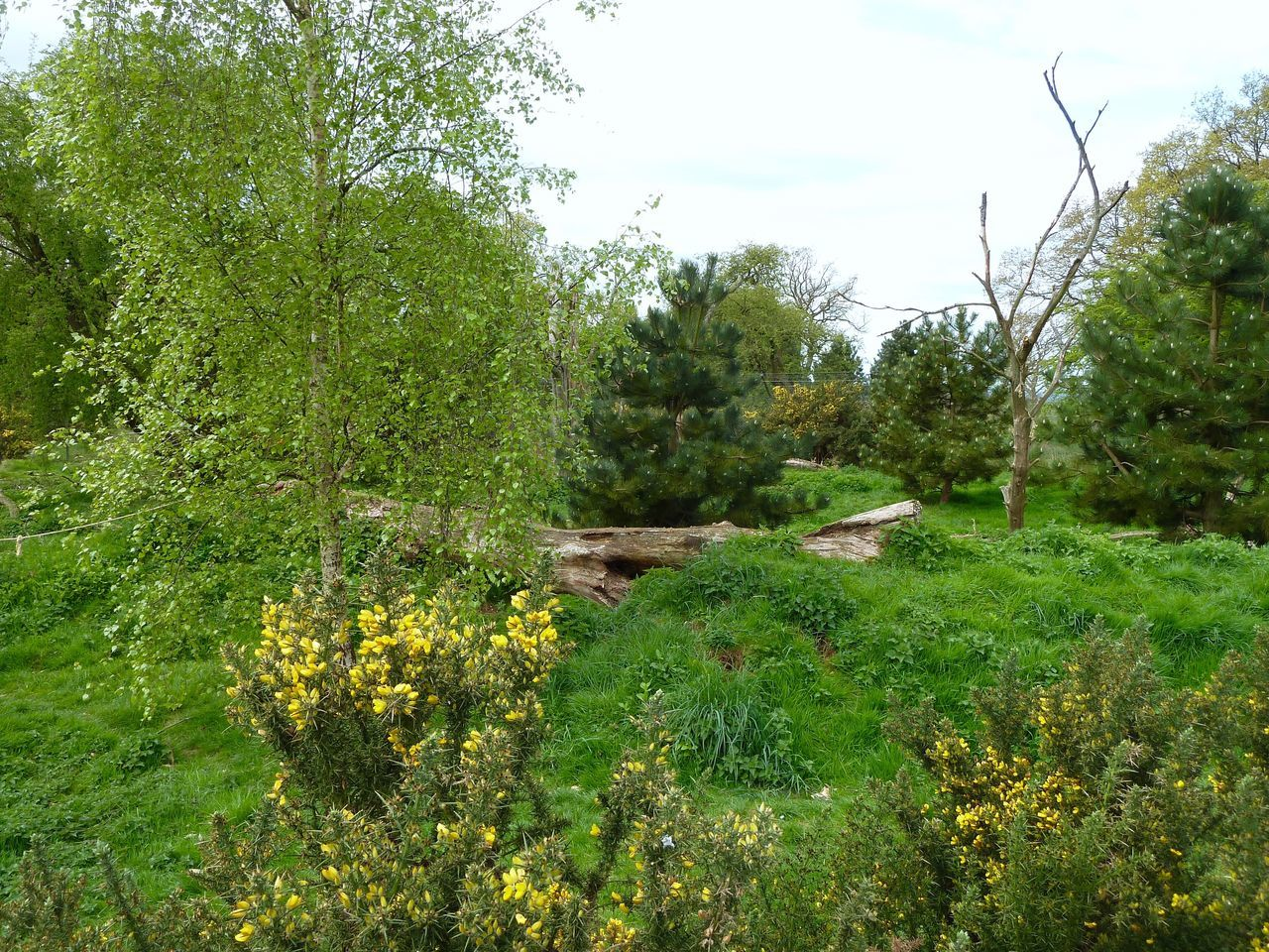 Whipsnade Zoo Springtime Scenics Field Tranquil Scene No People Growth Beauty In Nature Cloud - Sky