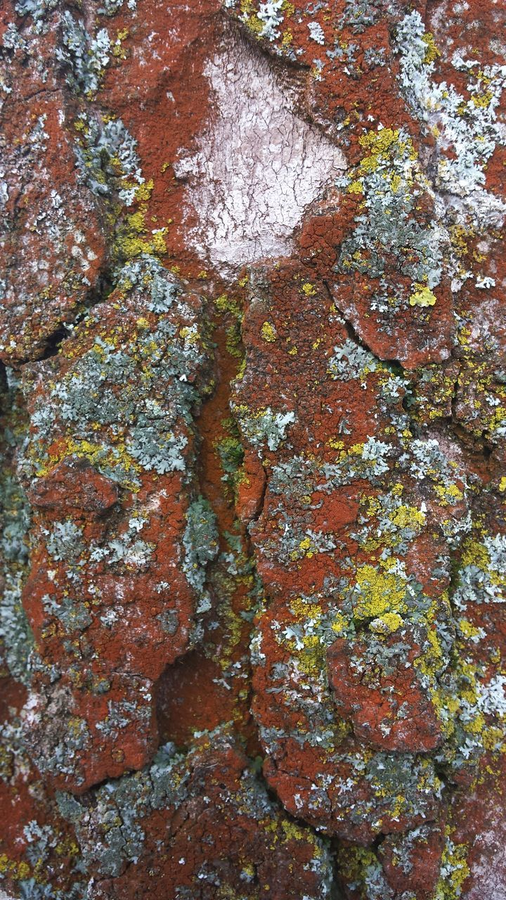 full frame, rock - object, lichen, geology, rough, backgrounds, textured, no people, nature, day, close-up, outdoors, rock face