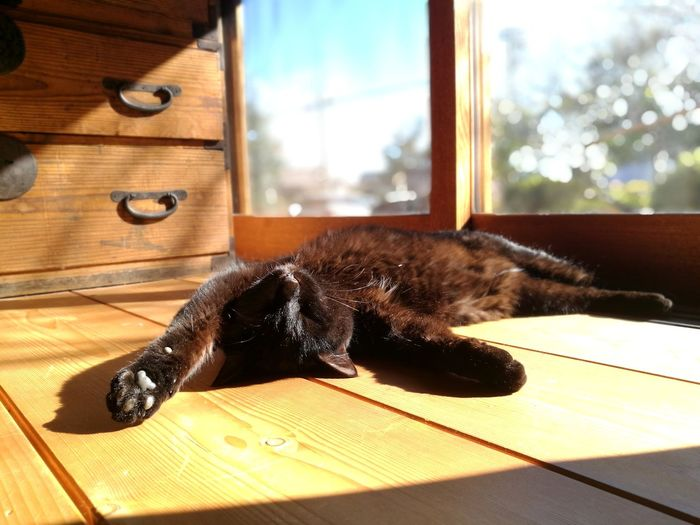 Black Cat Cute Lovely Chest Sleeping Window Cat Cat Lovers Sunlight Shadow Lying Down House One Animal Indoors  Pets Domestic Cat No People Domestic Animals Animal Themes Hardwood Floor Home Interior Day Mammal