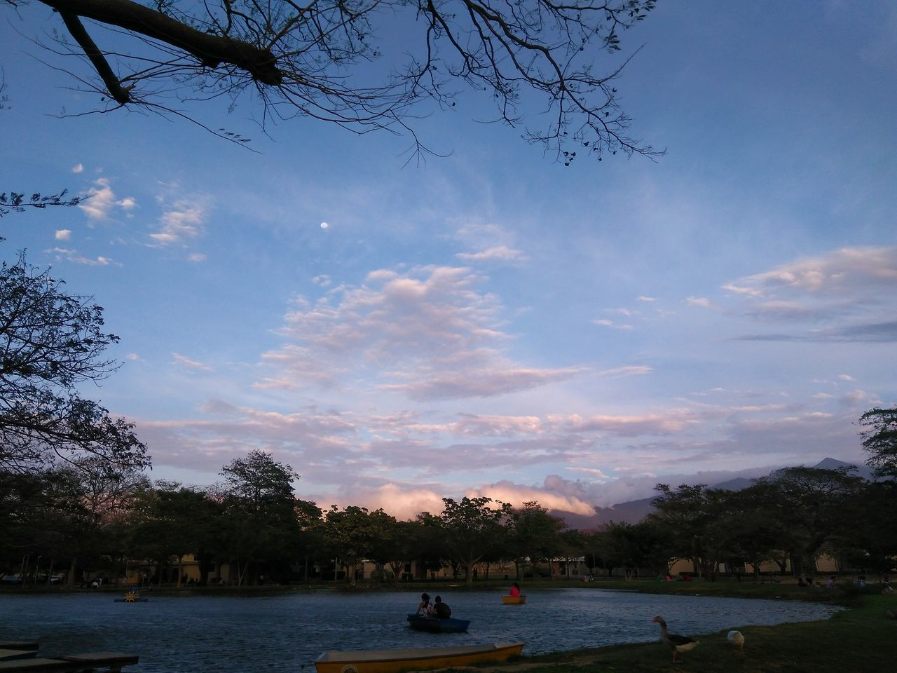 Tree Water Sky Outdoors Nature Moon Snapseed EyeEm Sunset Eyeemphotography F4F