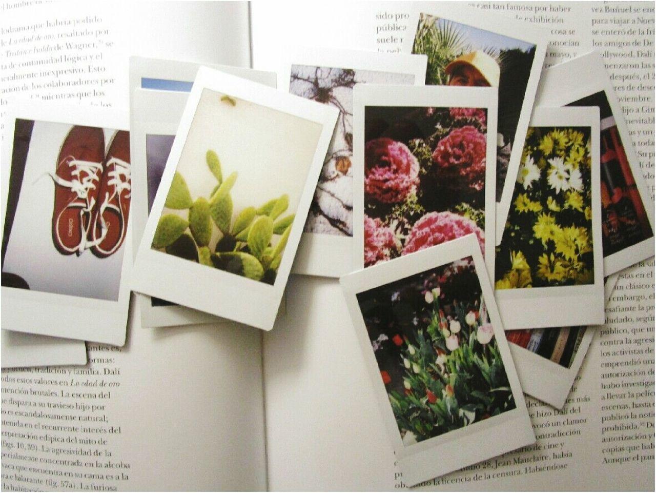 my mini instant photos MyArt Instantphoto Plant Instapic Indoors  Memories No People