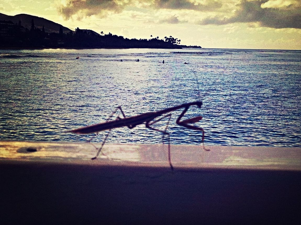 Praying Mantis Insects  on the Boats Nature Beautiful Surroundings