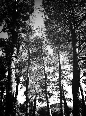 Blackandwhite Trees Promenade Eye4photography