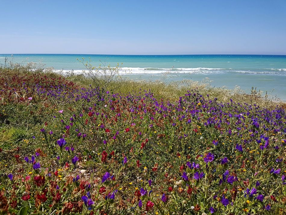 Sea Horizon Over Water Beach Water Nature Beauty In Nature Clear Sky Multi Colored Travel Destinations Outdoors Flower Wave Vacations Scenics Day Blue Week On Eyeem Art Is Everywhere Flower Collection Springtime EyeEmNewHere Landscape Photography Landscape_Collection Landscape Silence Of Nature