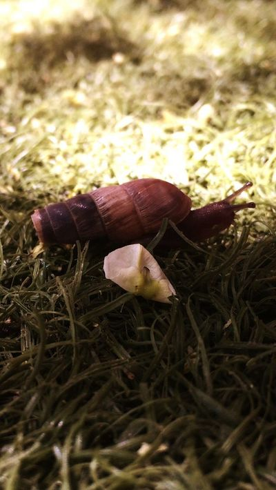 Nature Outdoors Snail