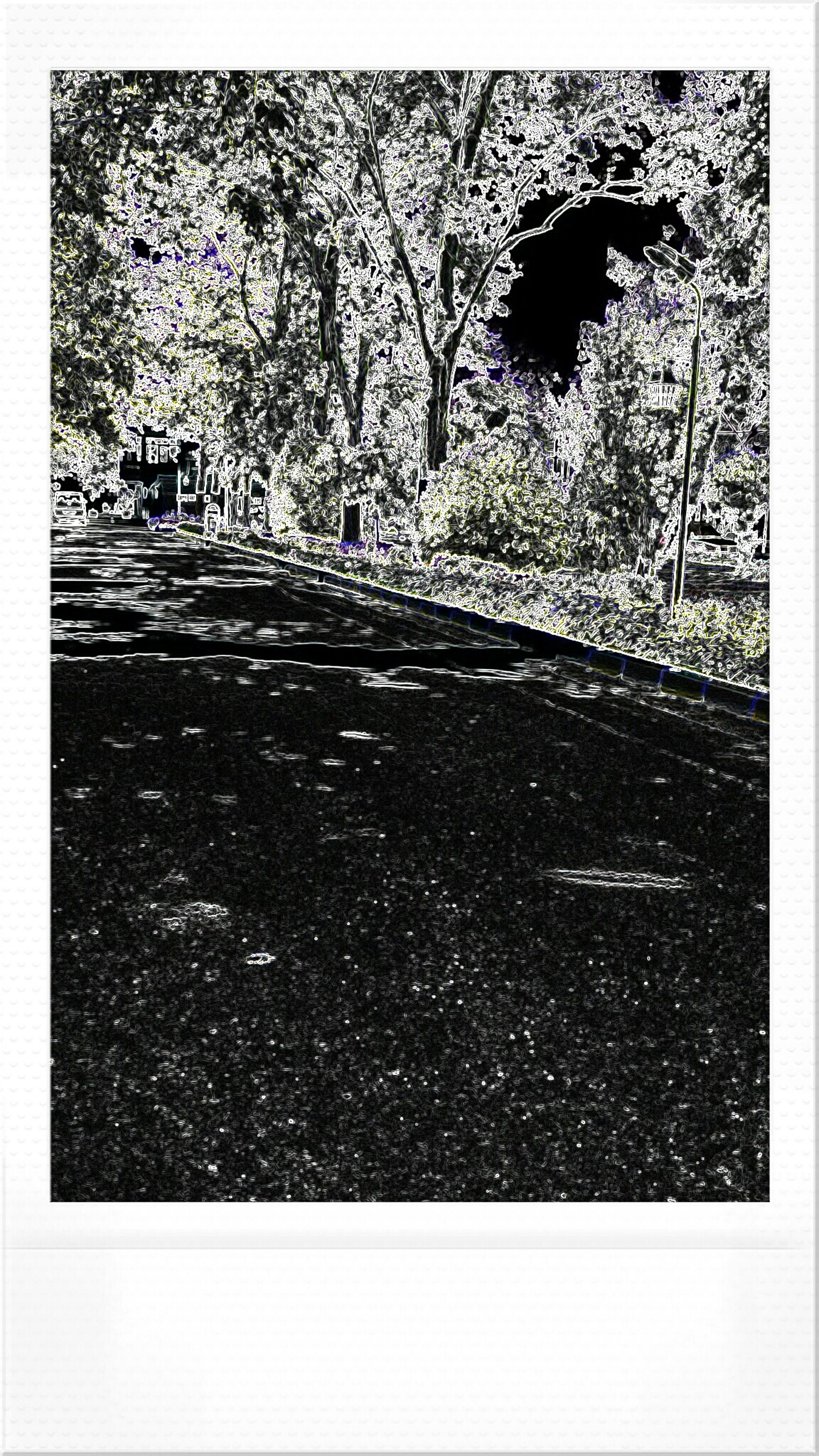 transfer print, auto post production filter, tree, street, road, transportation, bare tree, outdoors, day, built structure, nature, no people, growth, building exterior, architecture, the way forward, branch, sunlight, tree trunk, tranquility