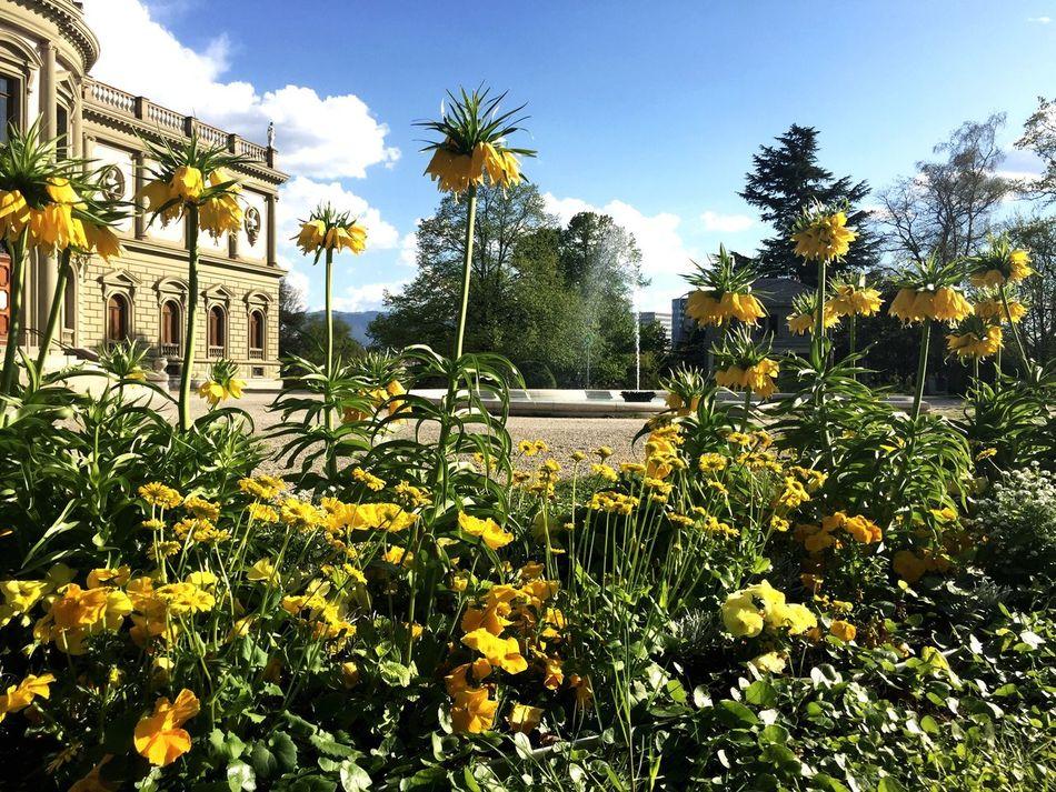 Ariana  Nature Flower Architecture Outdoors Blooming Geneva Geneve Tourism