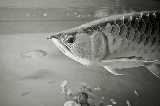 Fish First Eyeem Photo