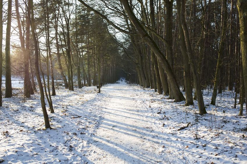 06.01.2017 The Stefan Starzyński Kabaty Woods Nature Reserve Cold Temperature Day Forest Kabaty Nature Nature Outdoor Activity Outdoors Park People Poland Reserve Snow Starzyński Stefan Warsaw Winter WoodLand Woods