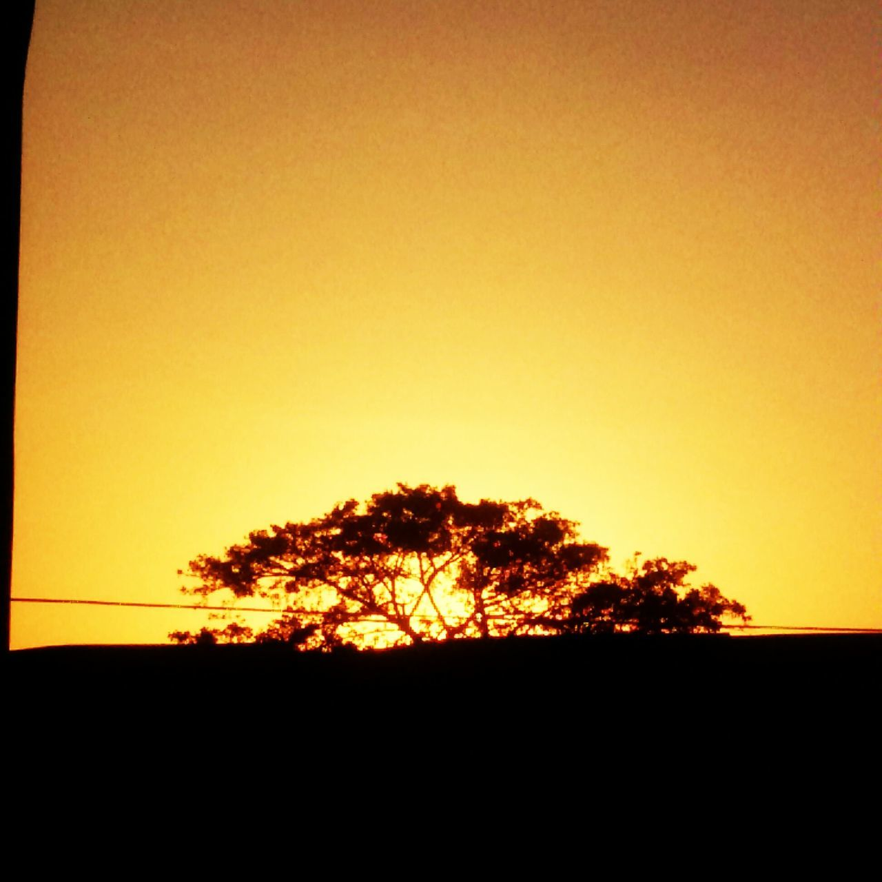 silhouette, sunset, tree, nature, tranquil scene, clear sky, scenics, orange color, tranquility, beauty in nature, no people, landscape, dusk, growth, outdoors, sky, yellow, day