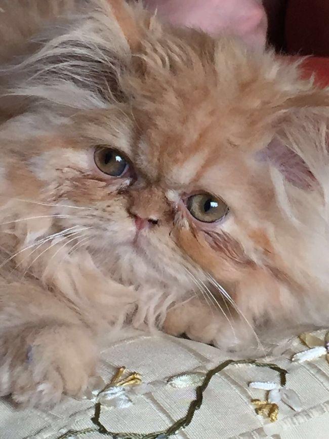 Cat Cat Lovers Cat♡ Sinfiltros