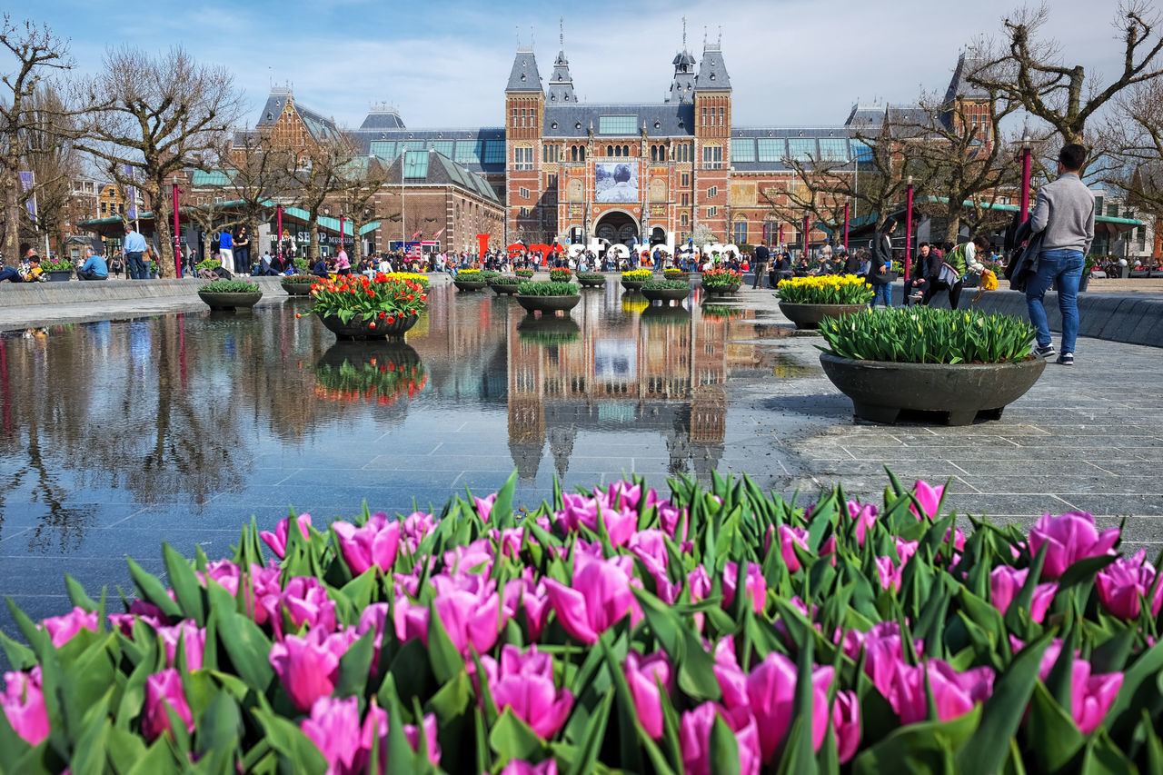 Tulips @ Amsterdam Museum Square Amsterdam Architecture Beauty In Nature Building Exterior Built Structure Day Flower Flower Head Fragility Freshness Growth Holland Large Group Of People Museumplein Nature Outdoors Pink Plant Reflection Rijksmuseum Sky Square Travel Destinations Tulip Water
