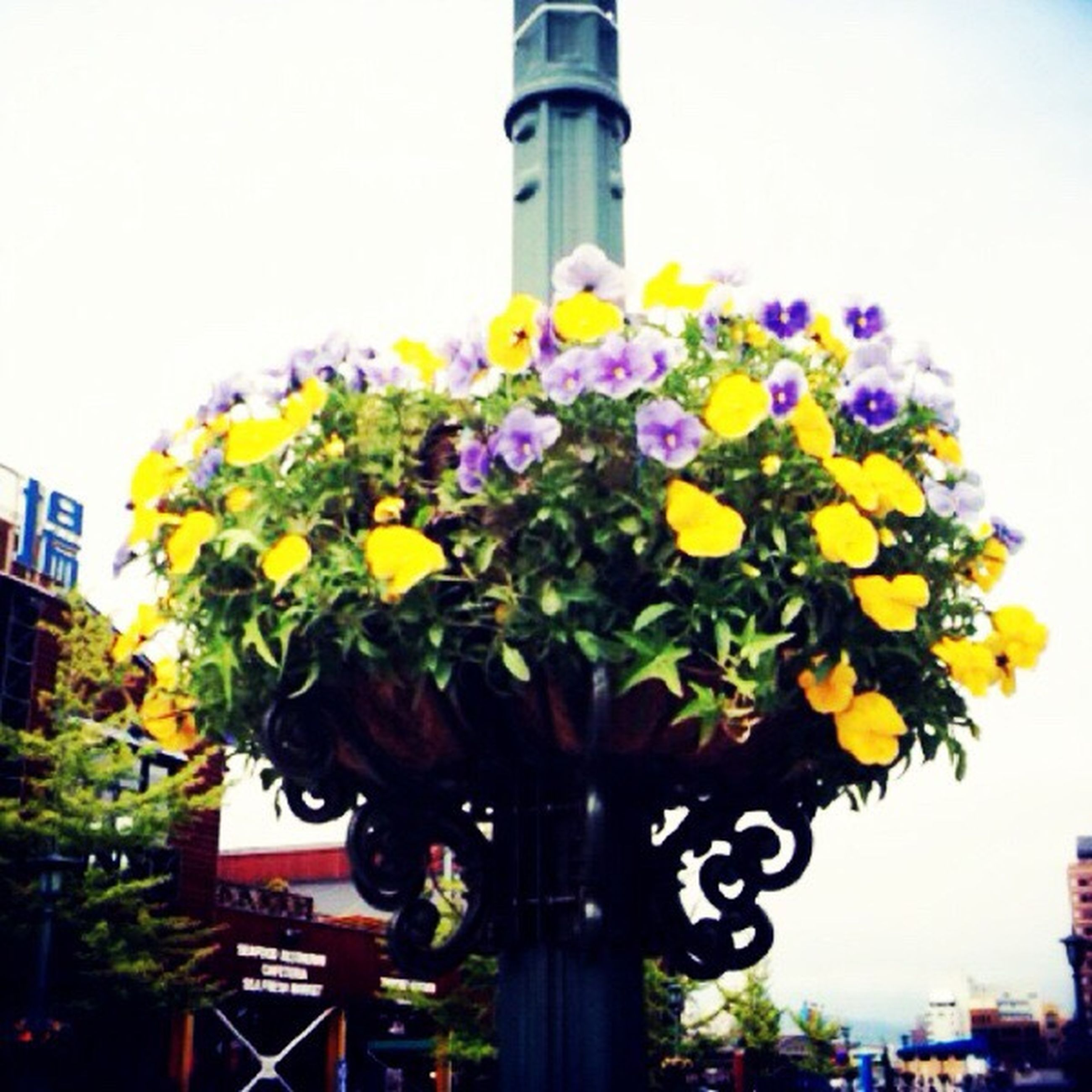 flower, architecture, built structure, low angle view, building exterior, clear sky, freshness, fragility, multi colored, plant, growth, day, sky, lighting equipment, yellow, outdoors, blue, blooming, no people, decoration