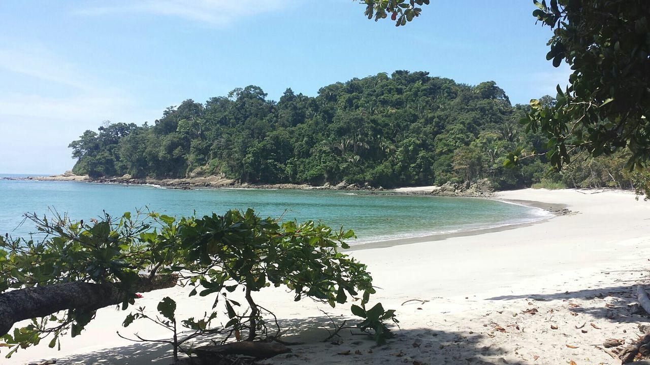 Costa Rica Palm Tree Beach Vacations Blue Water Nature Manuel Antonio Pura Vida ✌ Nature Photography FelicidadExtrema
