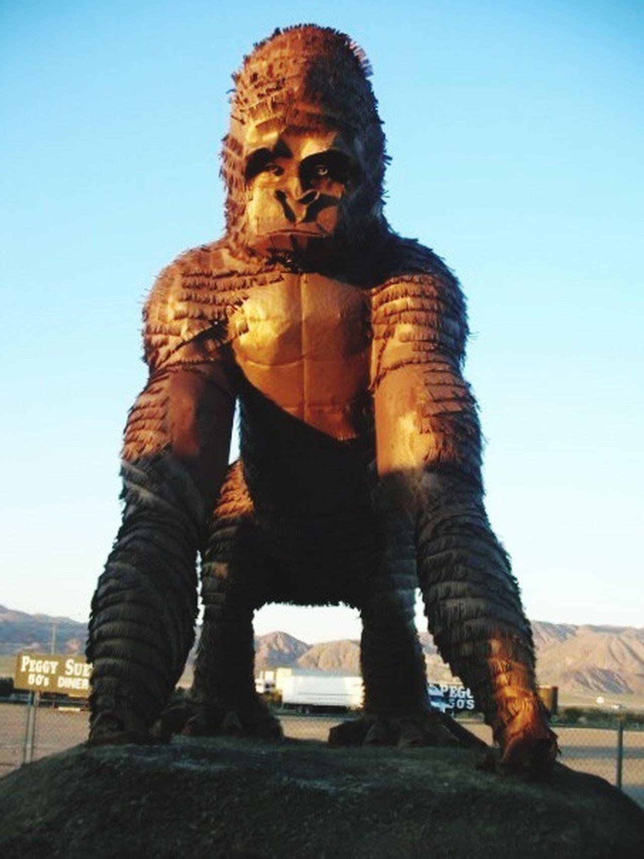 Grooar King Kong Strong Muscles Ape Monkey