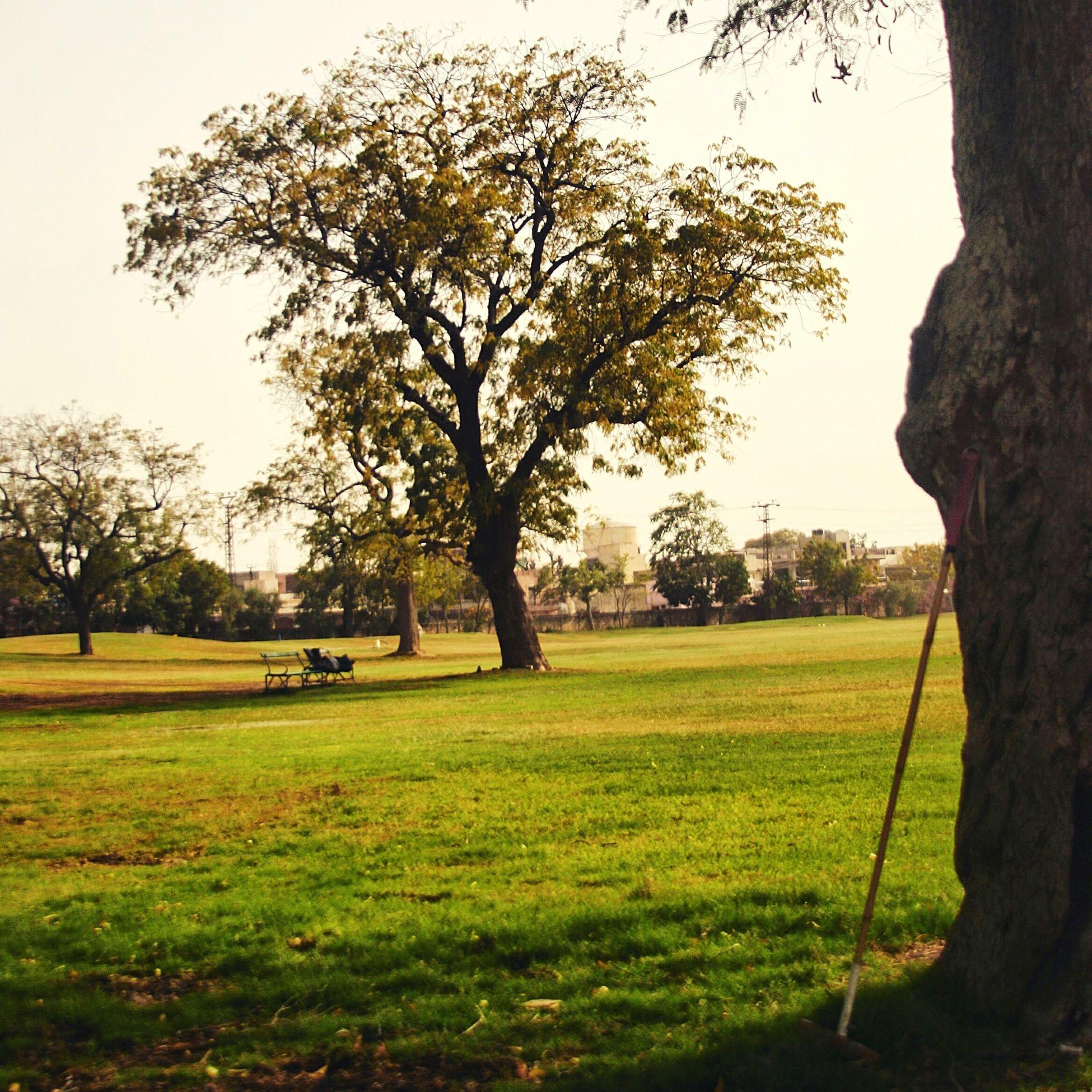 Greenfield Sunlight ☀ Theroyalgame Polo Mallet Mayocollege India