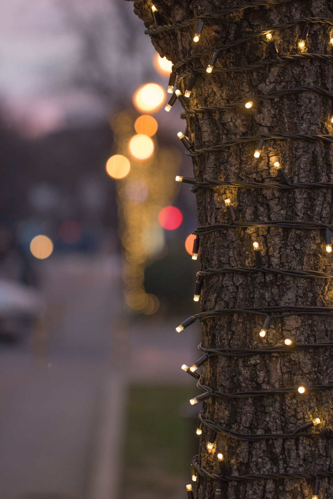 Celebration Christmas Christmas Decoration Christmas Lights Christmas Tree Illuminated Light Light And Shadow Light In The Darkness Lights Night No People Outdoors Tree Tree Tree_collection  Trees