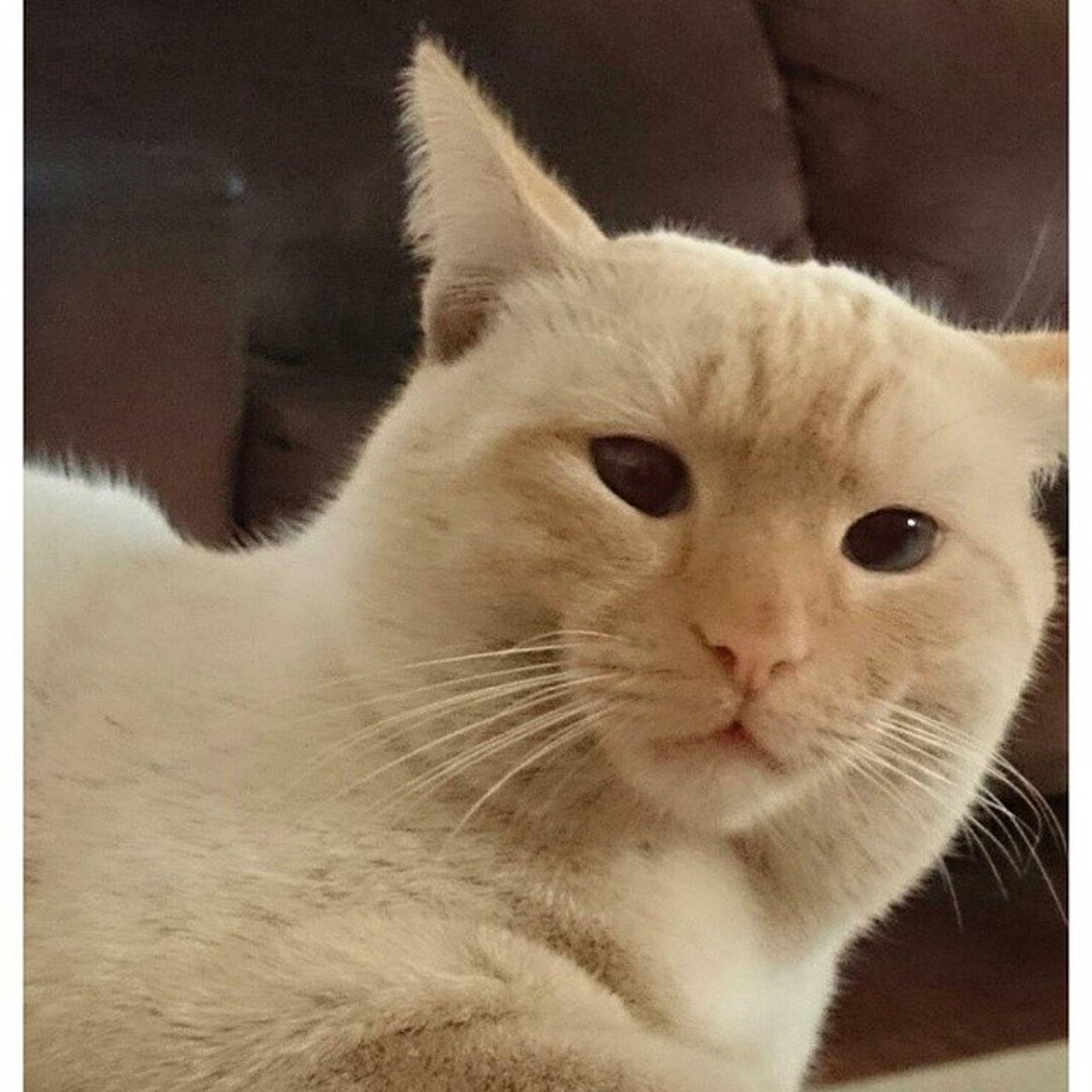 Didinhooo Boy Love Cat Cute Life Brazil