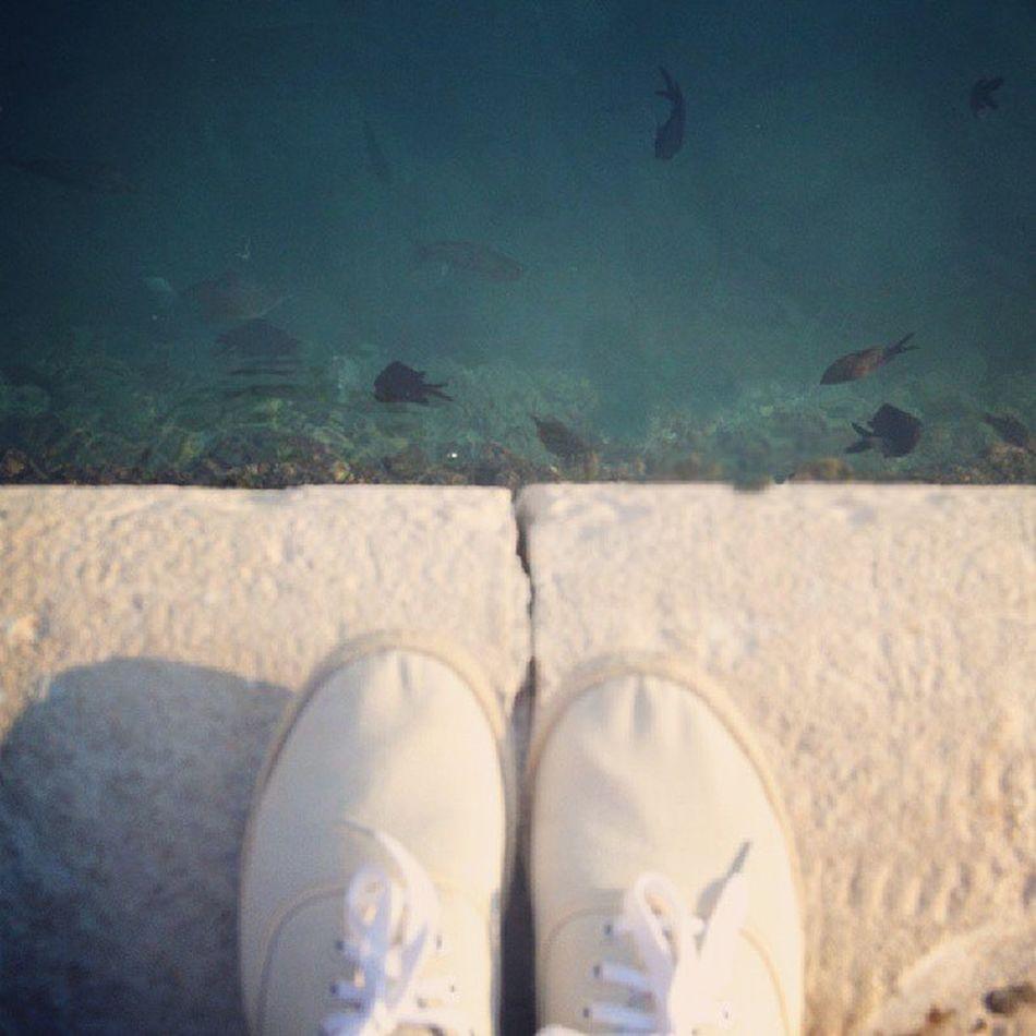 Fish Water Shoes Trampki seamorzesummermyholidayinstalovelikeforliketagforlikeplumChorwacjaOmiś2013.septemberhot