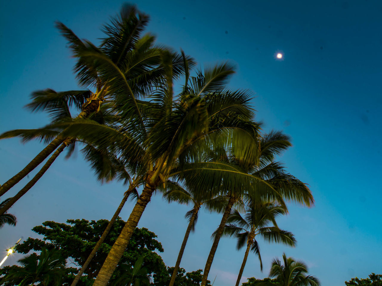 Moon in the trees Hanging Out Taking Photos Relaxing Enjoying Life Sea Sunrise Nature Sky Silhouette Tranquil Scene Beauty In Nature Outdoors Full Moon Light Tropical Showcase:april