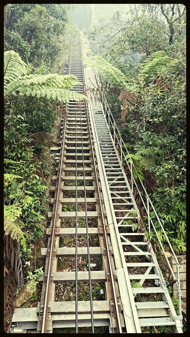 Hanging Out Taking Photos Check This Out Ferns Train Track Steep Slope Steep Hill Forestwalk Stairs Stairway