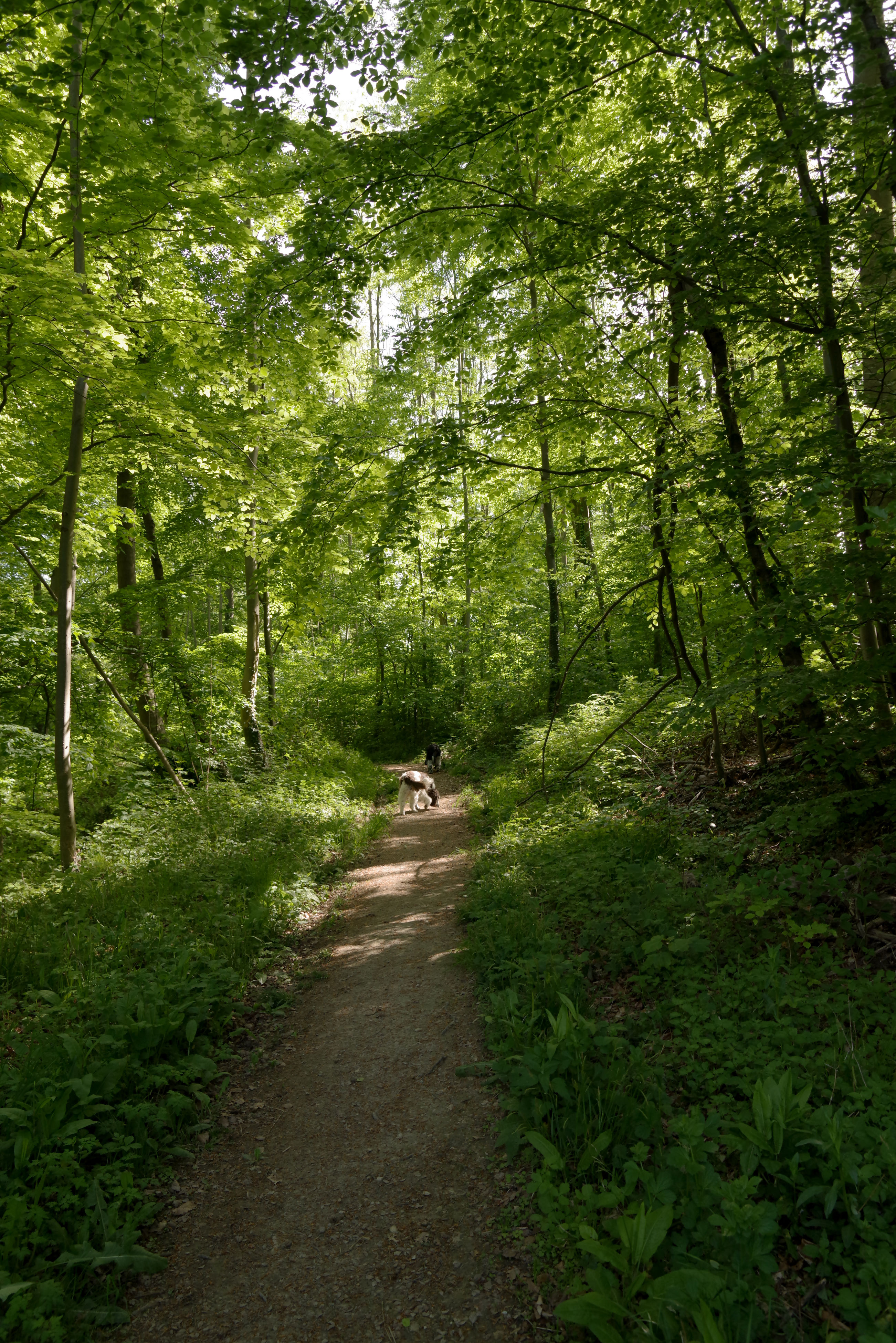 tree, forest, nature, walking, footpath, woodland, the way forward, green color, lush foliage, tranquility, wilderness, tranquil scene, day, road, outdoors, growth, adventure, plant, scenics, rural scene, full length, nature reserve, animal themes, beauty in nature, people, domestic animals, one person, grass, mammal