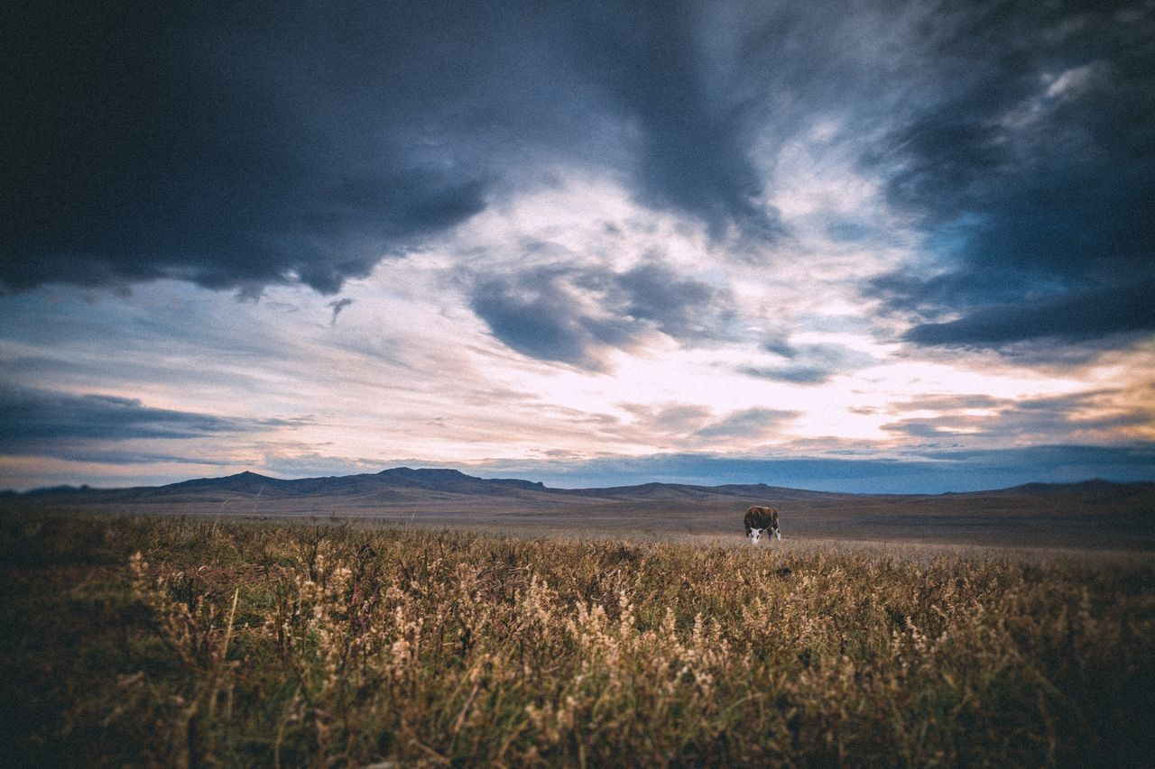Landscape Scenics Nature Beauty In Nature Sky Tranquil Scene Tranquility Rural Scene Cloud - Sky Field Growth Outdoors Agriculture No People Day Mountain Mongolia Ulaanbaatar Mongolian Nature EyeEm Nature Lover Autumn EyeEm Best Shots Mongolia