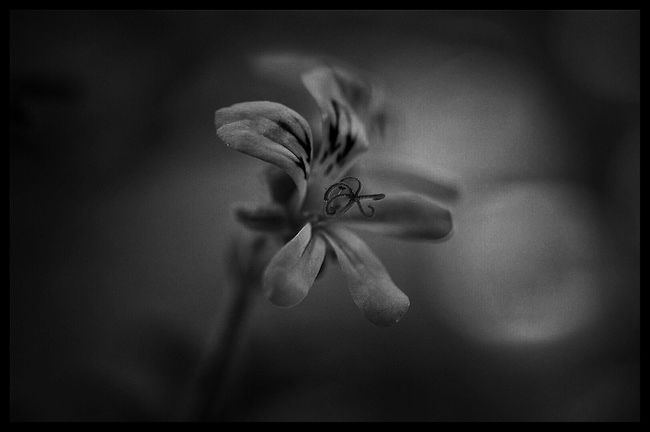 Every flower has a different face Flower Photography Macro_flower Flowers_collection Blackandwhite Blackandwhite Photography Black And White Flower Collection
