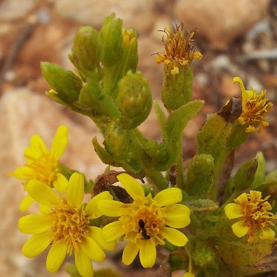 Nature Flower Yellowflower Visitcomino
