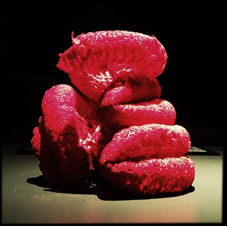 Bodyworlds  Composition Gunther Von Hagens Organic Red Still Life