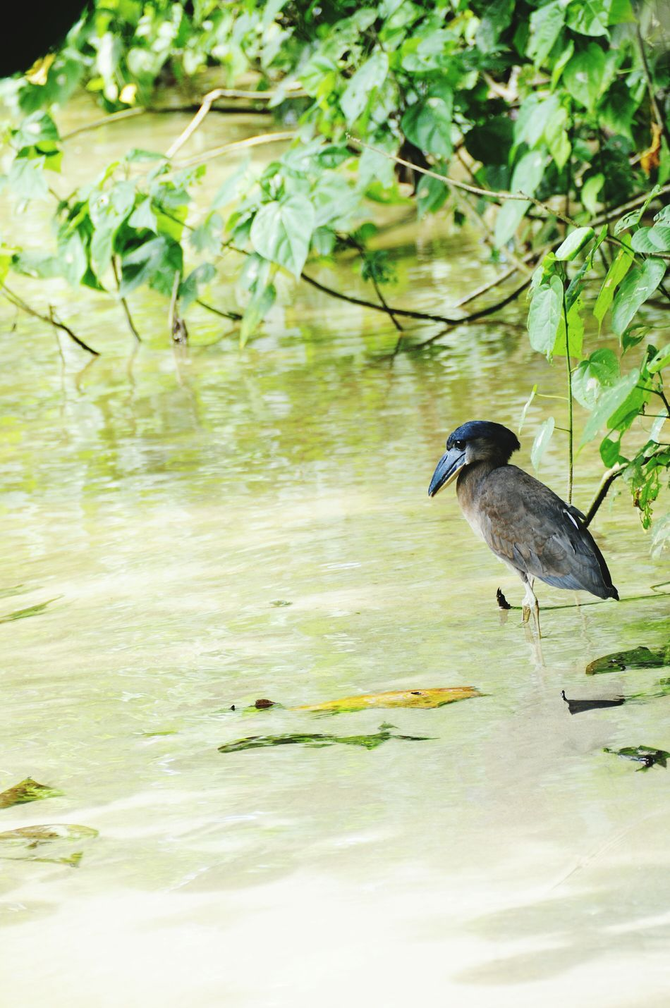 Beautiful stock photos of costa rica, Animal Themes, Animal Wildlife, Animals In The Wild, Bird