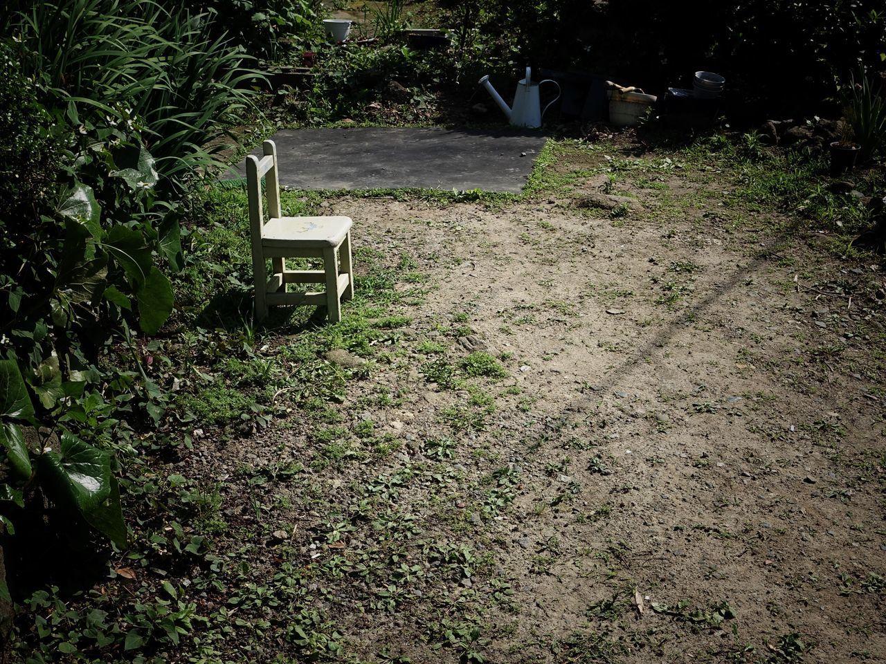 Chair Yard Garden Plant Grass Sunlight