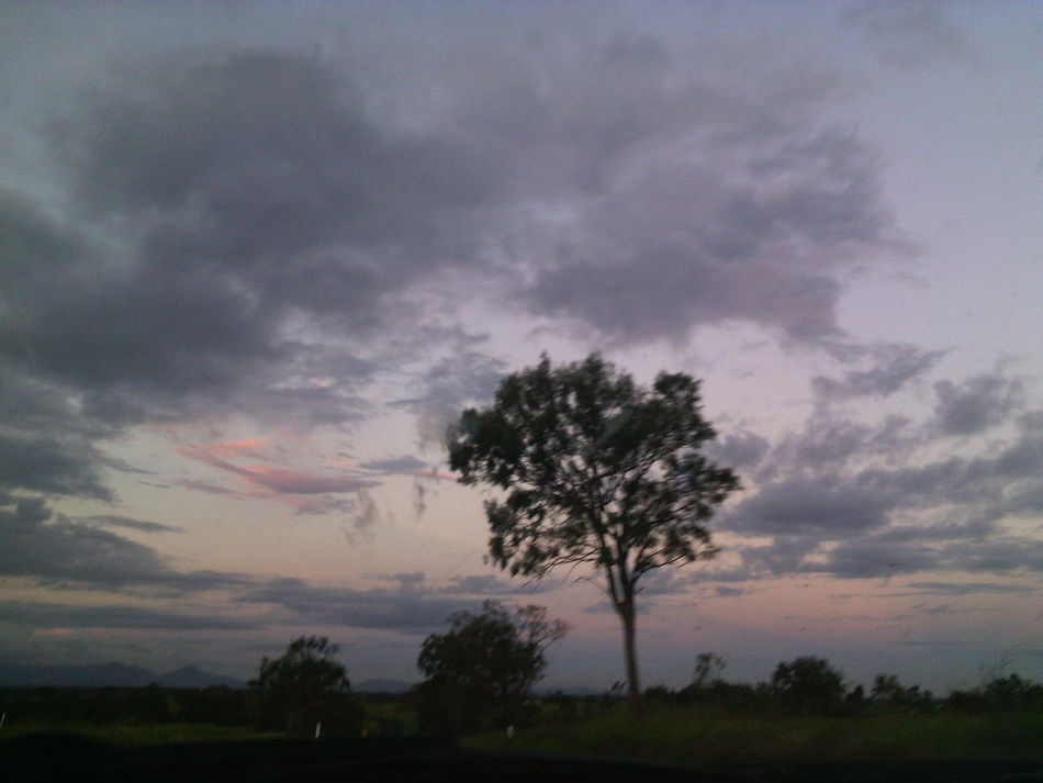 ⭐hello Naturelovers ⭐ I ❤ Tree's