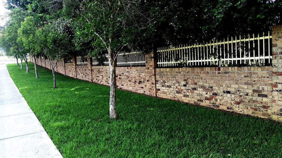 Hanging Out Tree_collection  Brick Wall Green Grass