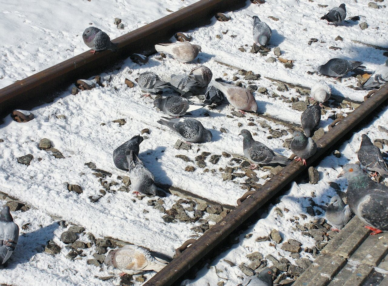 Outdoors Pigeons Snow EyeEmNewHere EyeEm Best Shots Outdoor Photography Streetphotography Rails Railroad Track Seoul Korea Travel Adventure Vacations Trip Picoftheday Photography