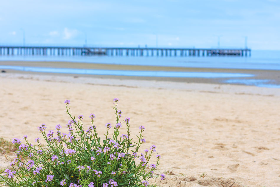 Altona, VIC Beach Beauty In Nature Coastline Day Flower Focus On Foreground Horizon Over Water No People Outdoors Pastel Colors Pier Sand Sea Shore Copy Space