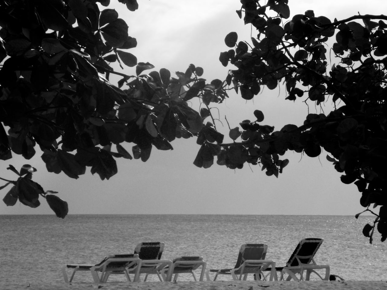 sea, horizon over water, beach, nature, water, beauty in nature, tranquility, day, tree, chair, outdoors, leaf, sky, no people, growth, scenics, branch, vacations, clear sky
