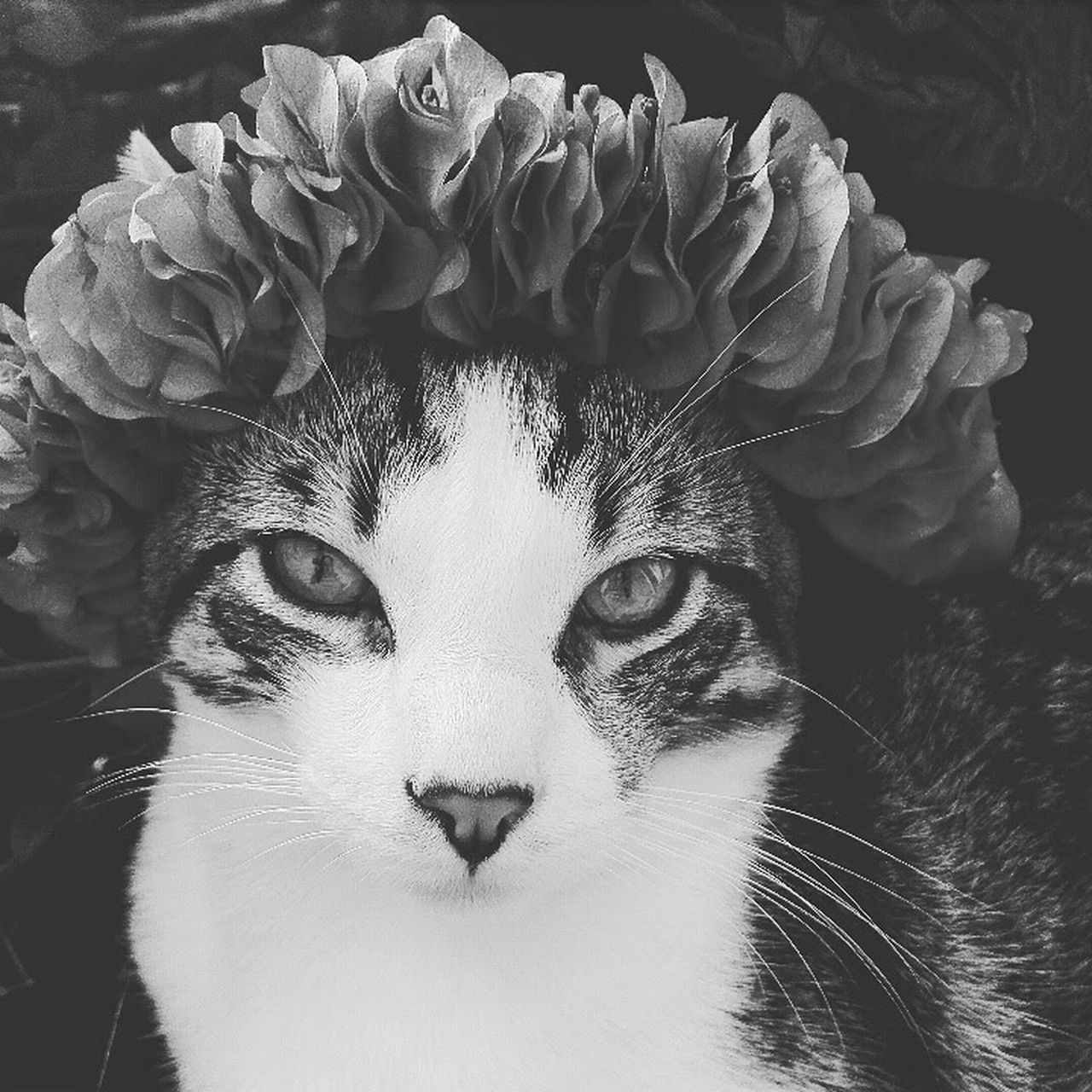 Sr kevin :) Catlovers Cat♡ Kevin Corona Flowers Flores Photography Moments