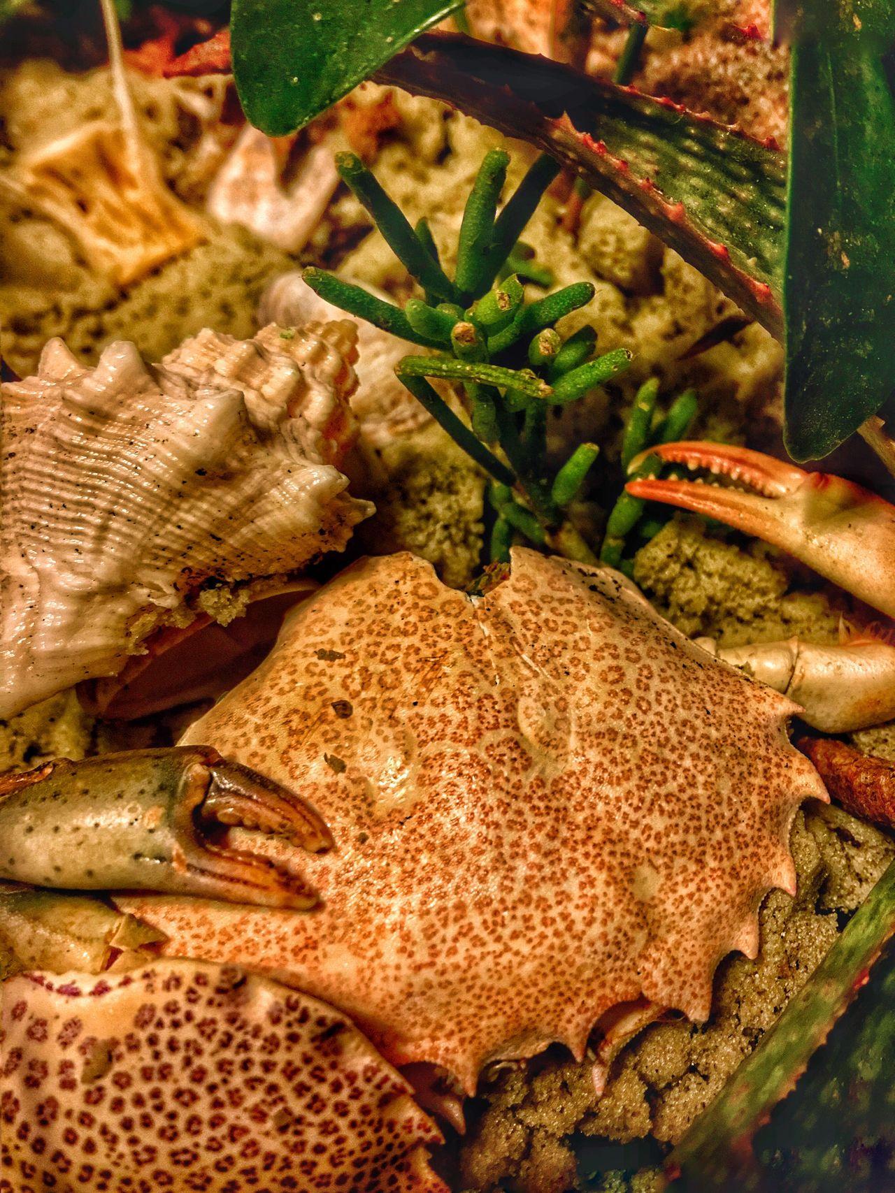 Crab, crab legs, close up, nautical, underwater