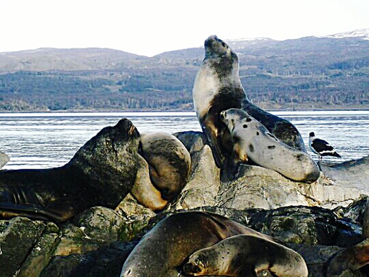 Water Sea Outdoors Animal Themes No People Nature Mammal Beauty In Nature Landscape Ushuaïa Fin Del Mundo Argentina Travel Floating On Water Canal Beagle Seal