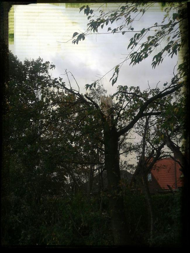 Kleiner Sturmschaden in Altenberge ( Haren_Ems )
