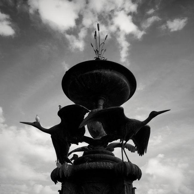 Birds Fountain IPhoneography Sky Silhouette Silueta Copenhague Storks Cigueña Cigüeñas Seeing The Sights Fine Art Photography